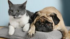 Katze und Hund Haustier - © Shutterstock