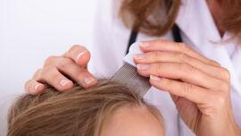 Läuse_shutterstock_1252772110 - Vor allem zum Schulbeginn im Herbst haben die Kopfläuse Hochsaison.